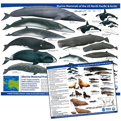 Marine Mammals of the US North Pacific and Arctic