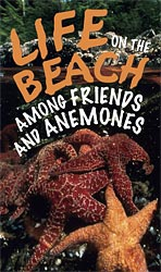 Life on the Beach: Among Friends and Anemones