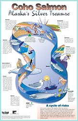 Coho Salmon Life Cycle