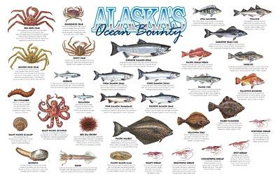 Alaska 39 s ocean bounty poster bookstore alaska sea grant for Types of fish in alaska