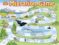 Salmon Migration Game