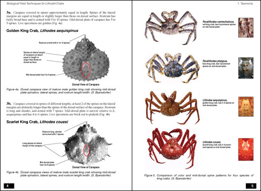 Lithodid Crab Field Guide Sample Pages