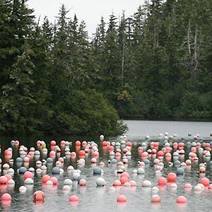buoys in bay