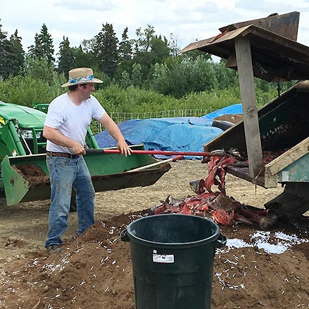 working with compost pile