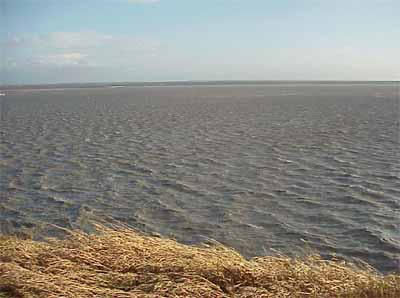 research paper estuaries Estuaries act as a repository for methylmercury, storing toxic particulates in both   in the first paper, the researchers studied the production of.