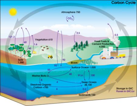 Carbon and Nitrogen Cycle Venn Diagram