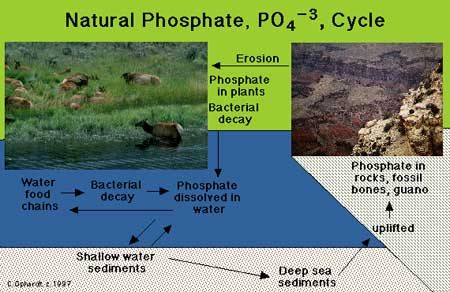 Research papers eutrophication