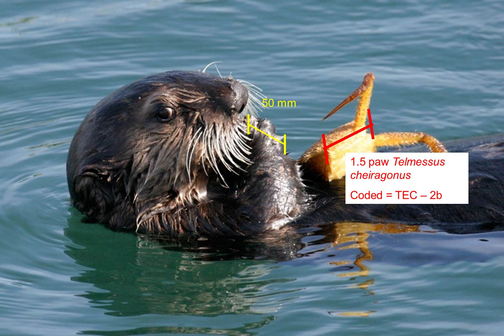 The Southern Southeast Alaska Sea Otter Project | research ...